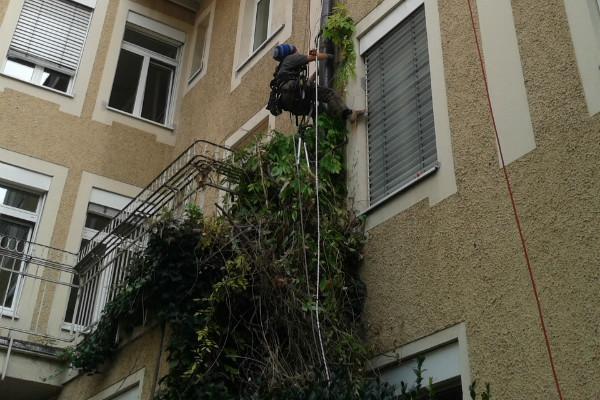 Industriekletterer München Fassadenbegrünung Grünschnitt Fassadenbewuchs